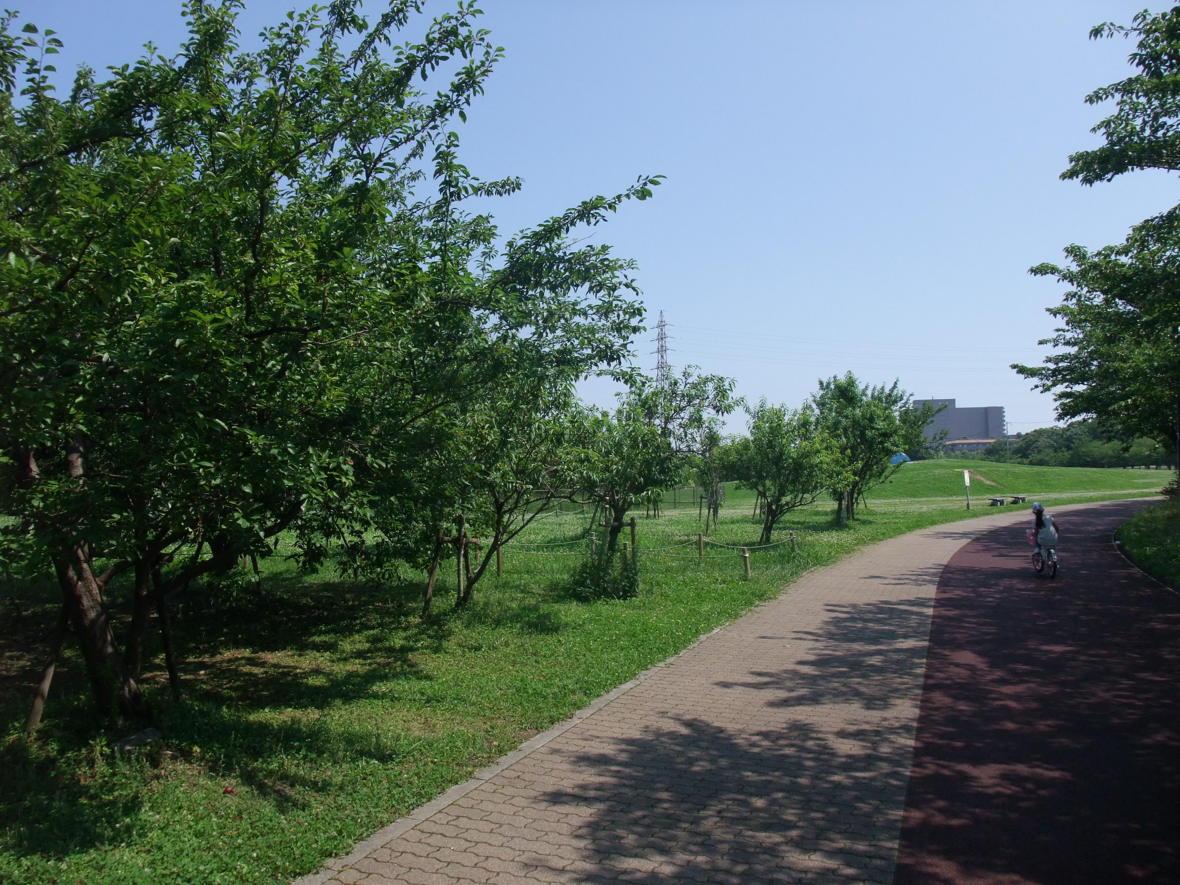 垂水健康公園子供自転車