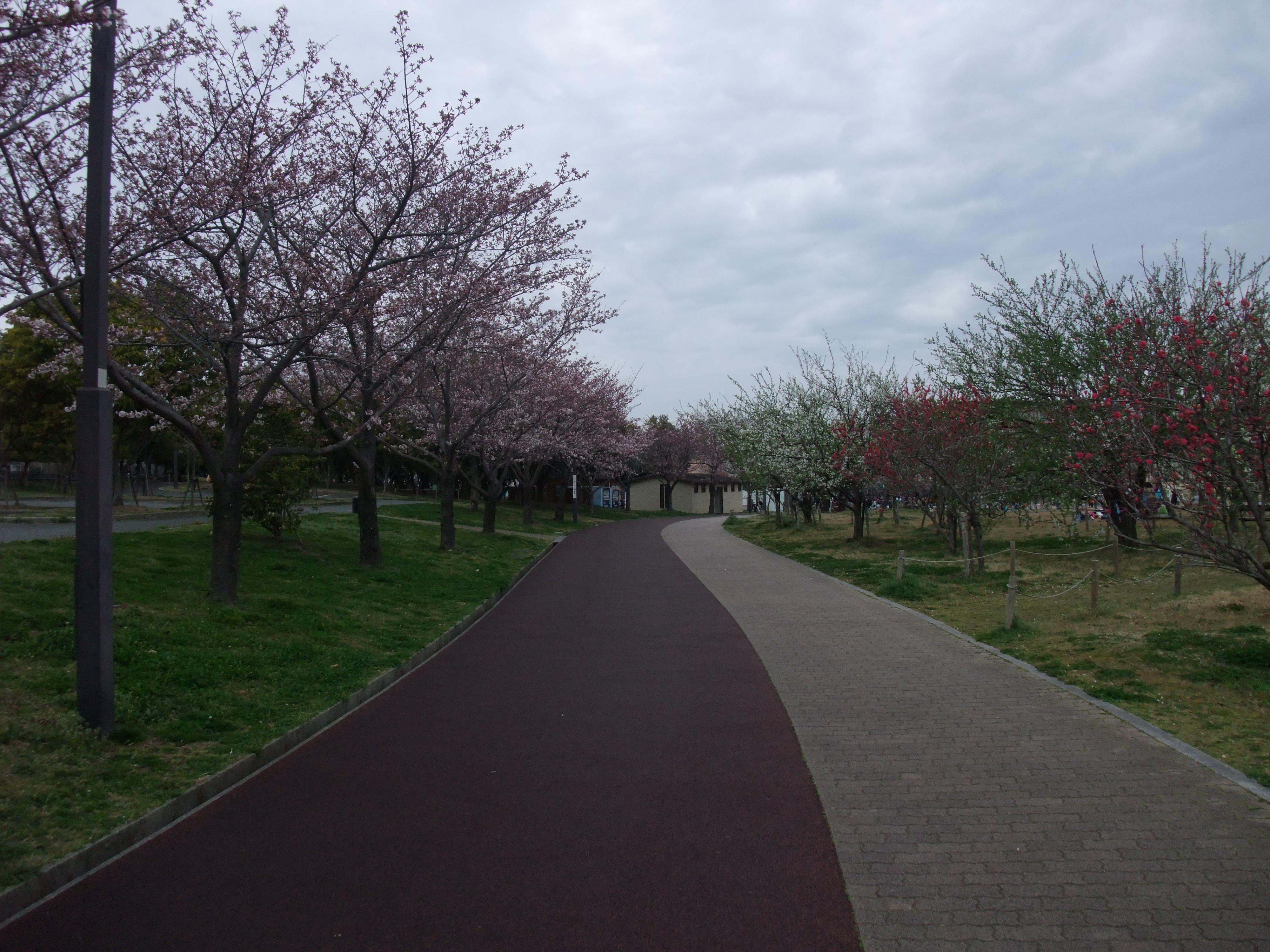 垂水健康公園外周
