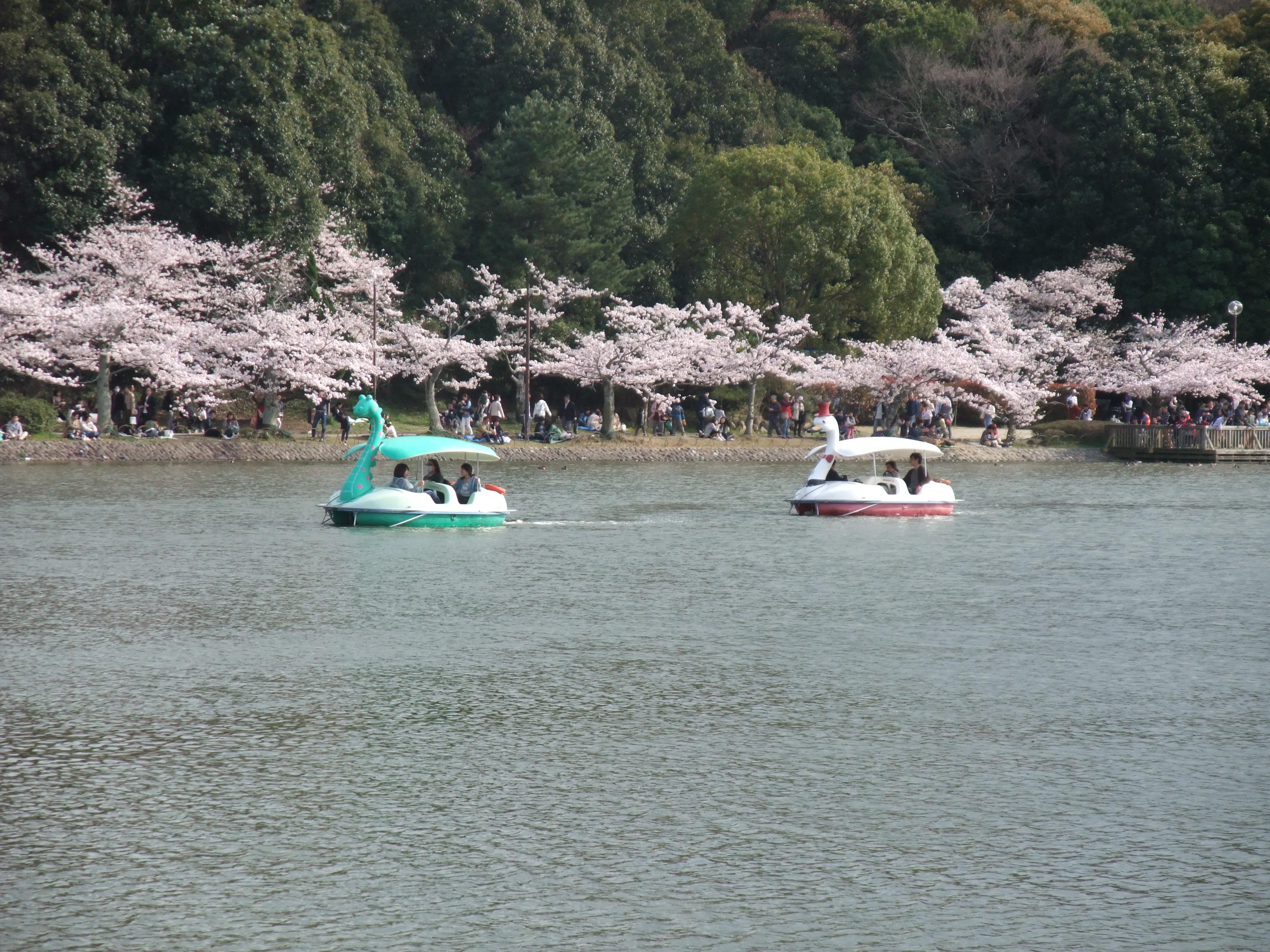 明石公園ボート